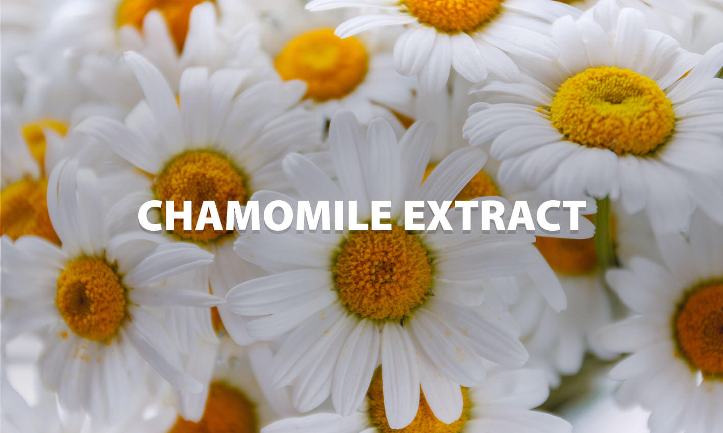 Cool & Calm Chamomile