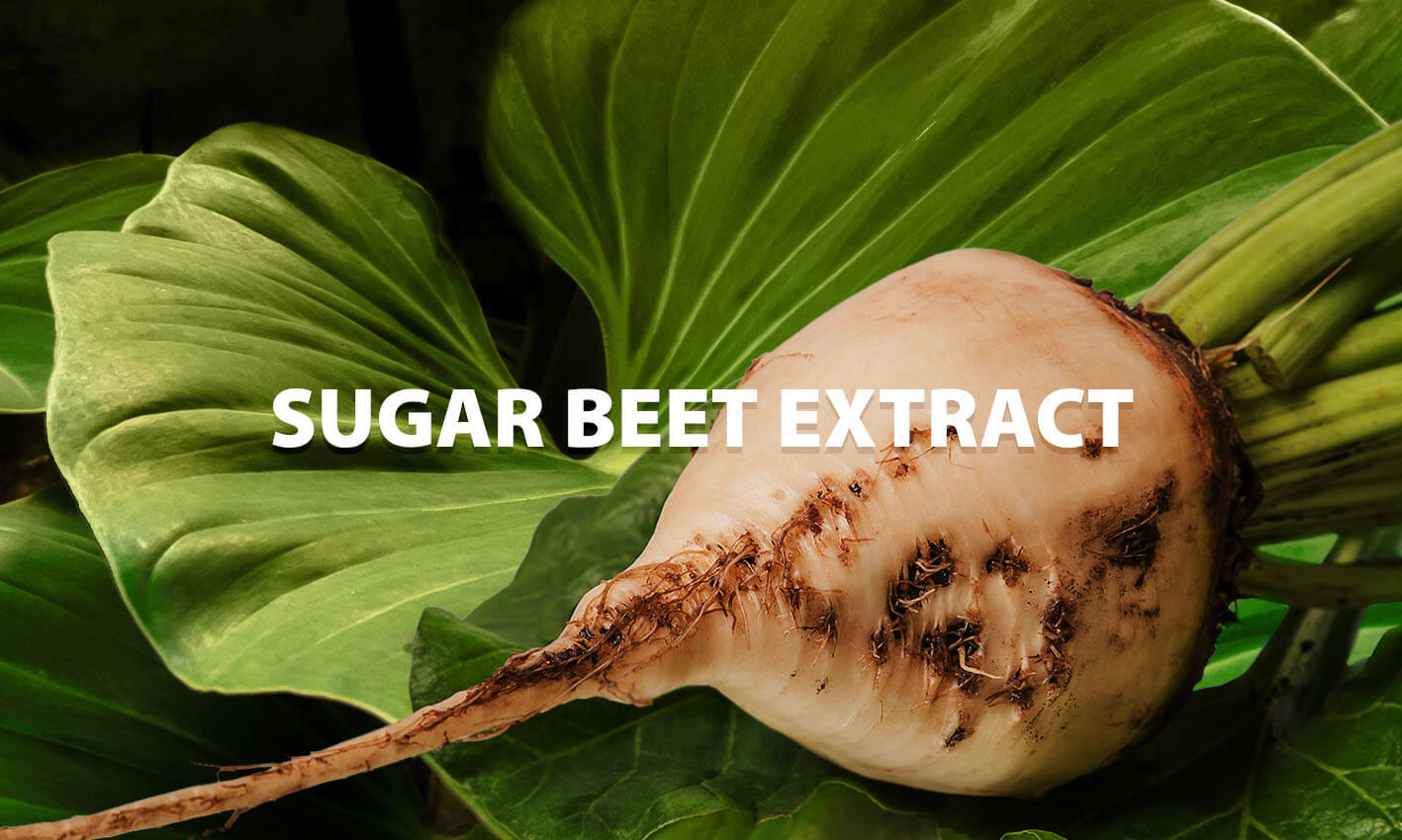 Sugar Beet Extract acts as an Osmolyte
